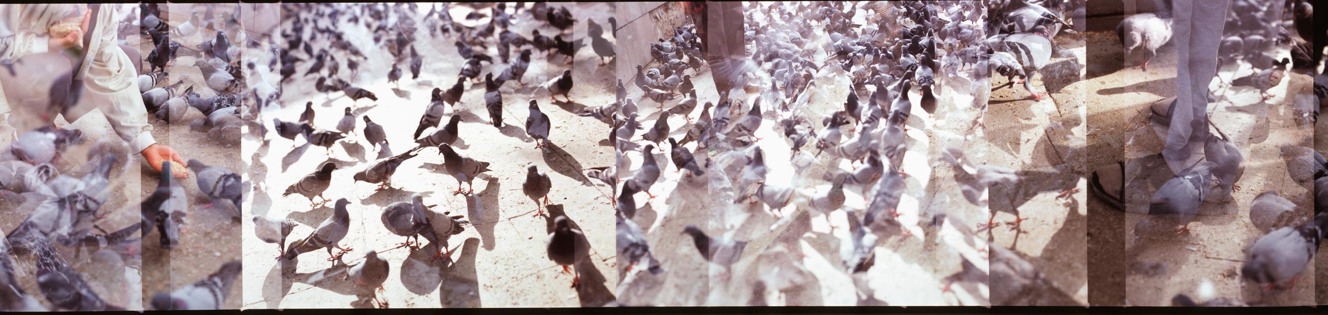 Ankara-Ulus-pigeons-2-web