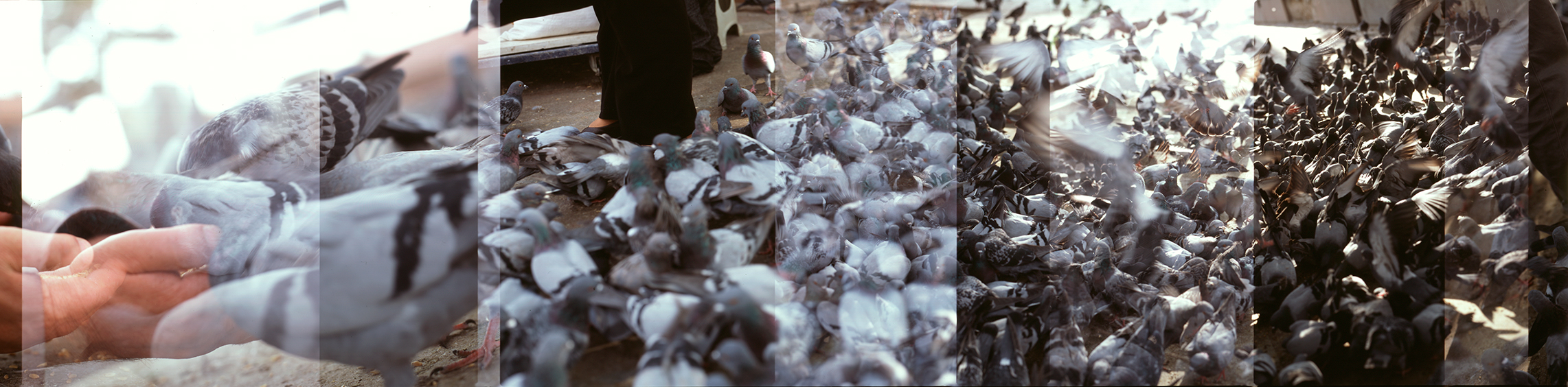 Ankara-Ulus-pigeons-4